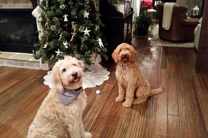 Pet Friendly Cherie's Pet Sitting - My Concierge of Greer