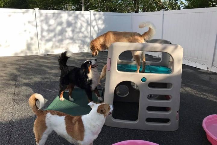 Pet Friendly Spoiled Rotten Doggie Daycare