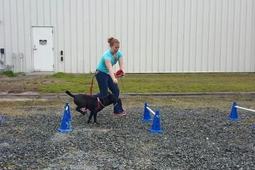 Pet Friendly K9 Fitness with Beckie