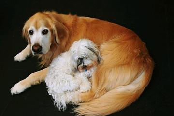 Pet Friendly LexiDog Boutique and Social Club