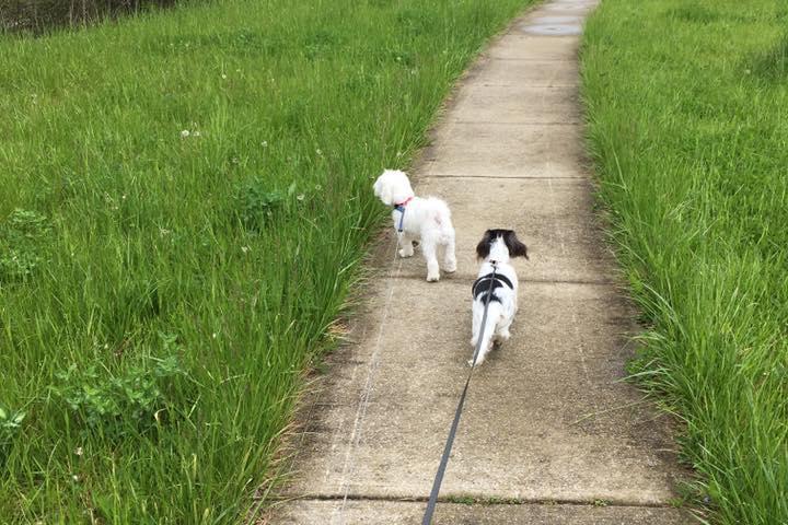 Pet Friendly Hills Hound Walking