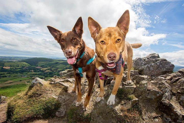 Pet Friendly Pawtrait Ireland