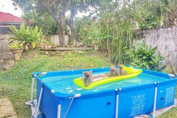 Pet Friendly Super Furry Pet Boarding