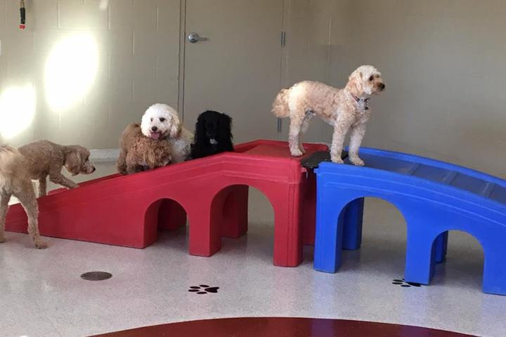 Pet Friendly Meadowbrook Veterinary Clinic North