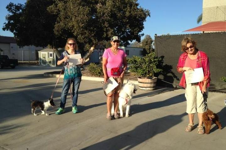 Pet Friendly SixPaws Dog School