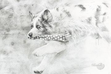 Pet Friendly Portraits By Jozef