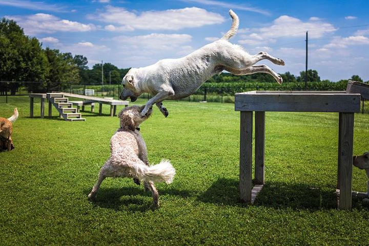 Pet Friendly Zionsville Country Kennel