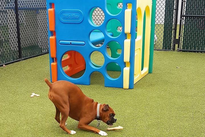 Pet Friendly Canine Kindergarten at the Park