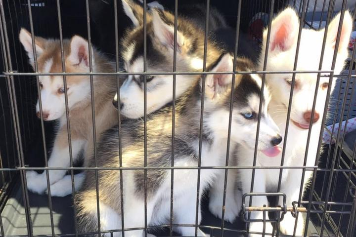 Pet Friendly Fortuna Veterinary
