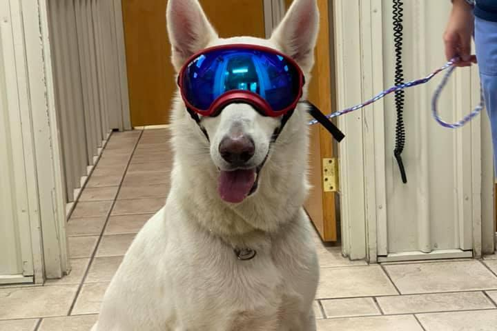 Pet Friendly Volunteer Veterinary Clinic