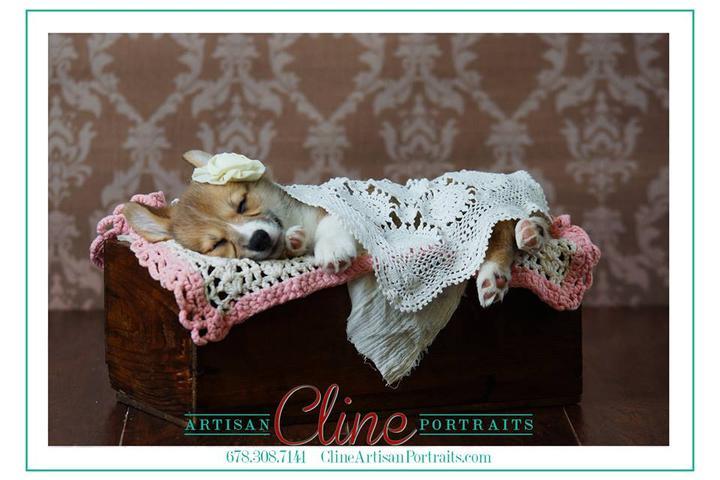 Pet Friendly Nose Art Pawtraits -Couture Photography