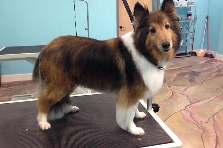 Pet Friendly Lucky Dog Grooming and Boutique