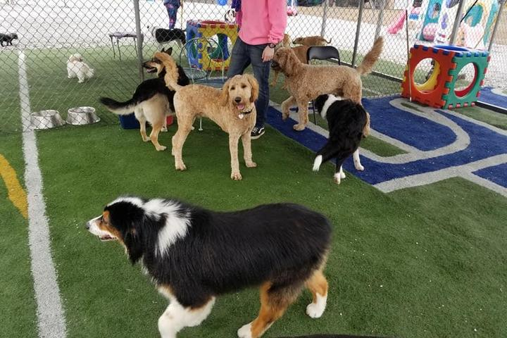 Pet Friendly Lucky Bones Country Club