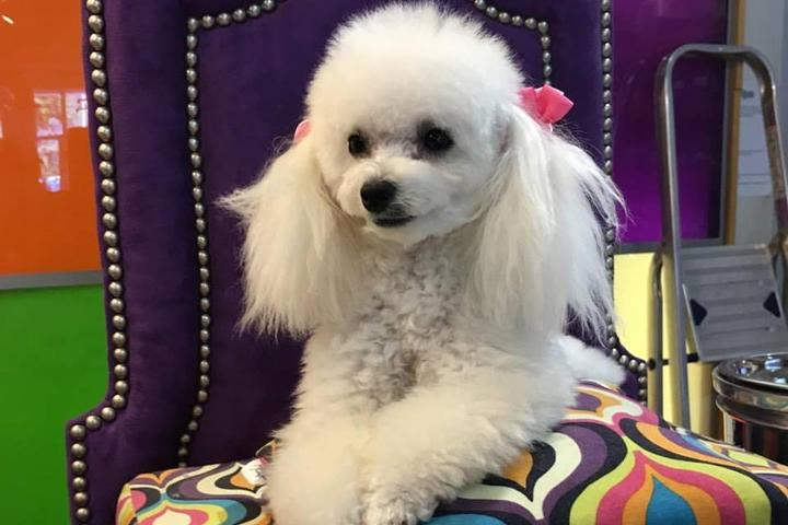 Pet Friendly Dog Bar - Miami's Original Pet Boutique