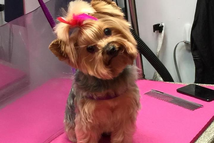 Pet Friendly Happy Dog Productions Mobile Grooming