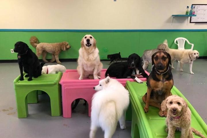 Pet Friendly Augusta Dog Training and Daycare