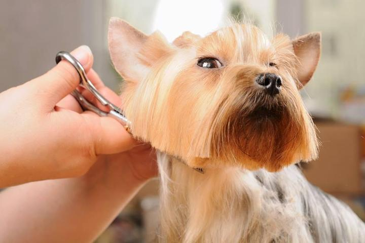 Pet Friendly Happy Spa Dogs Mobile Grooming