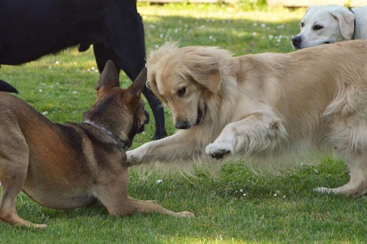 Pet Friendly Shamrock Ranch Kennels & Stables