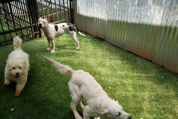 Pet Friendly Urban Dog Retreat