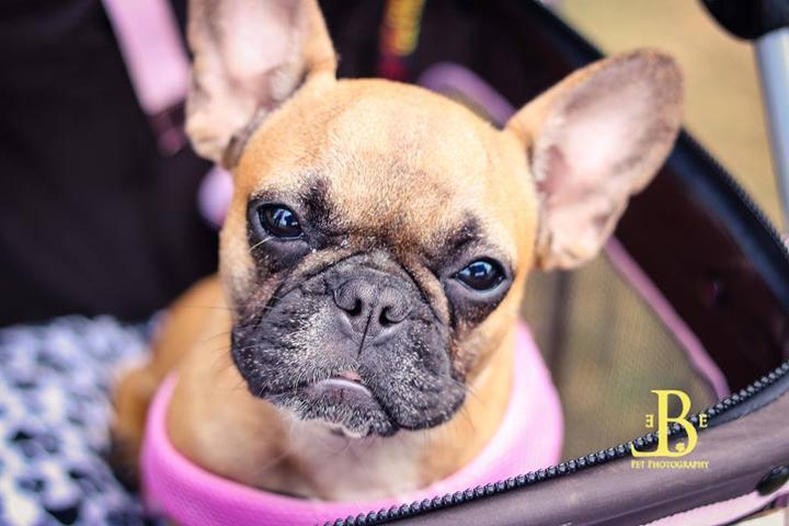 Pet Friendly Elbe Pet Photography