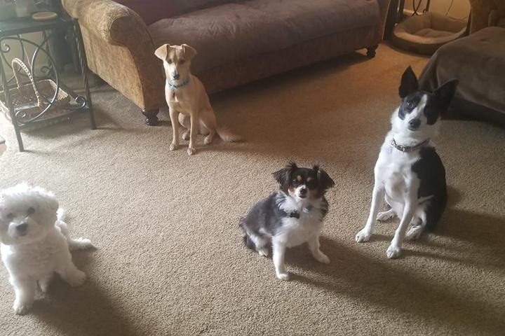 Pet Friendly Denice's Doggie Daycare & Boarding