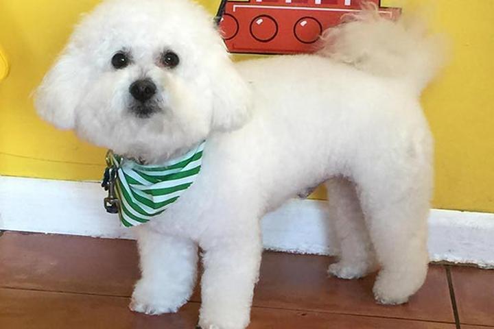 Pet Friendly Dog Charm Pet Grooming