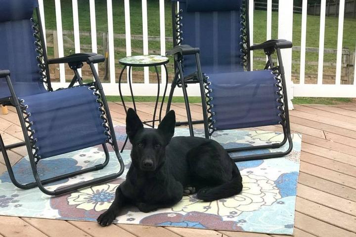 Pet Friendly Sirius Dog Training