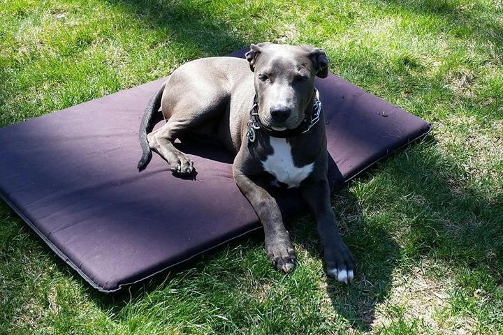 Pet Friendly Wolfen1 Dog Training