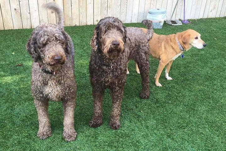 Pet Friendly The Ark Pet Spa and Hotel Red Bank