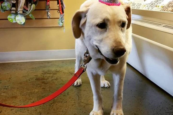 Pet Friendly Three Dog Bakery - Albuquerque