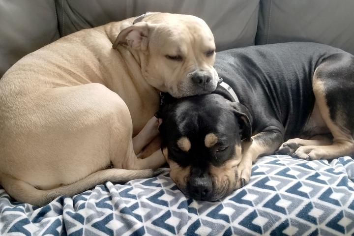 Pet Friendly Animal Rescue League of Iowa