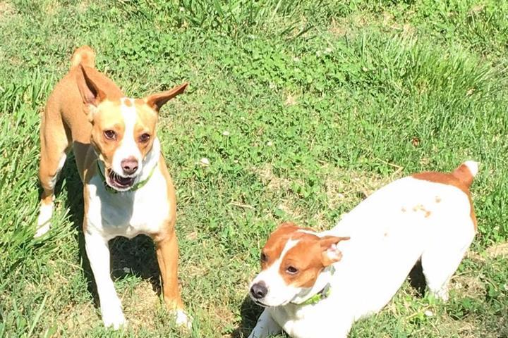 Pet Friendly Shady Oaks Boarding Kennel