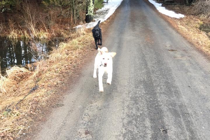 Pet Friendly Tails To Trails Pet Care Services LLC
