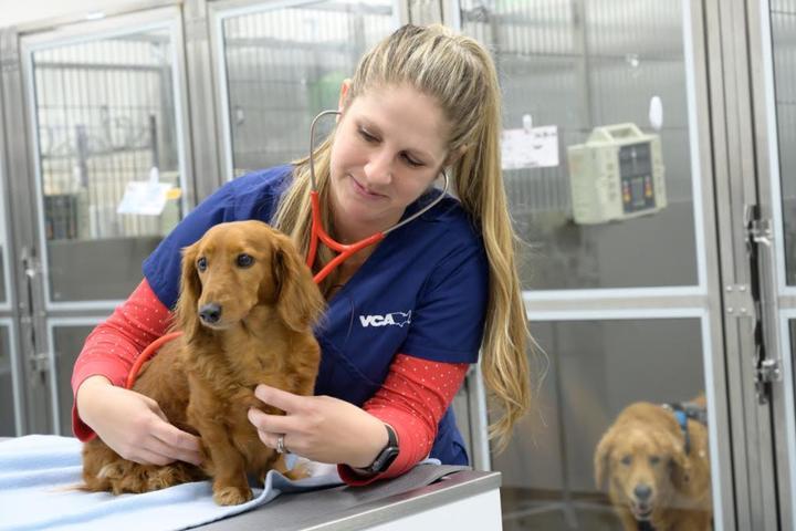 Pet Friendly VCA California Veterinary Specialists - Ontario