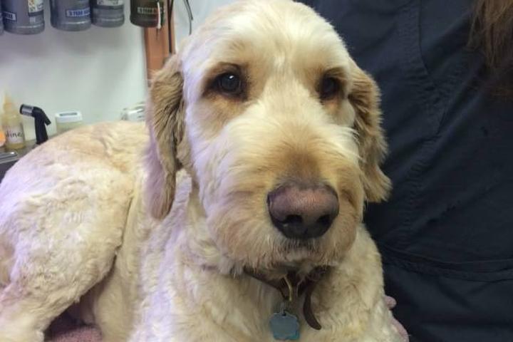 Pet Friendly Alta Vista Animal Hospital