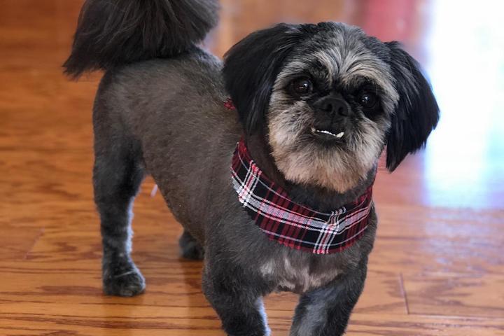 Pet Friendly Aussie Pet Mobile Grooming SoCo Maine