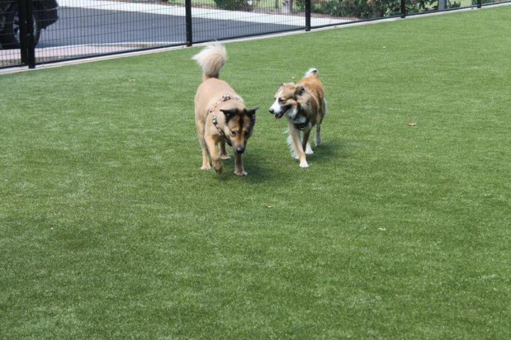 Pet Friendly Laurel Oak Farm Dog Kennel