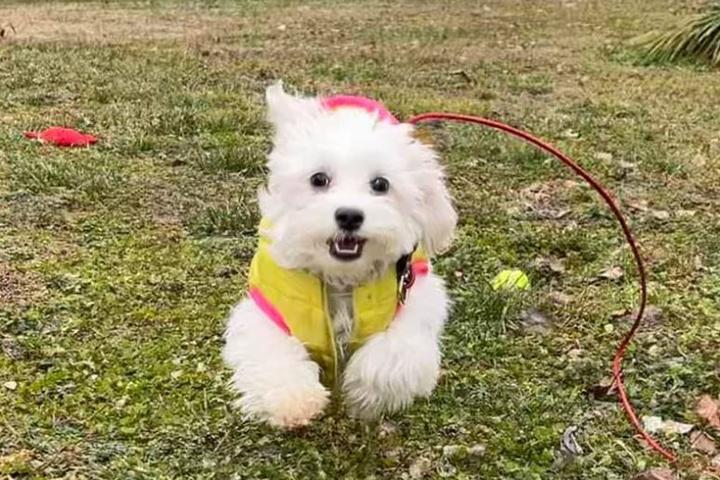 Pet Friendly Amanda's Dog Daycare And Boarding