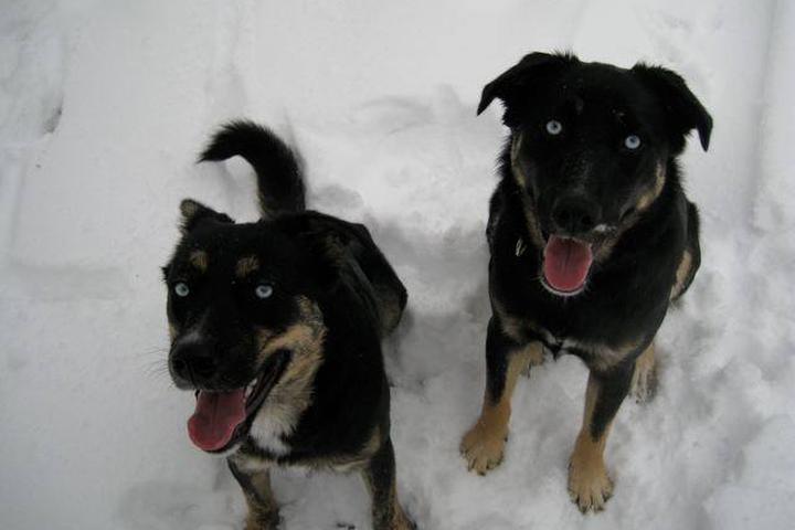 Pet Friendly Aunt Karen's Lucky Dogs