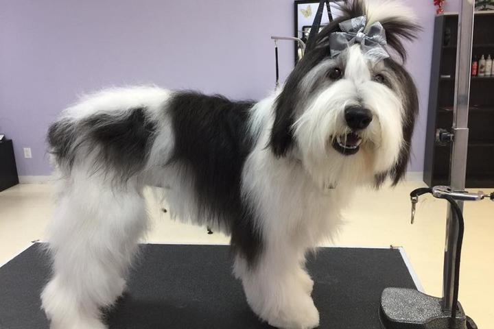 Pet Friendly Lovely Paws Pet Grooming Salon, LLC