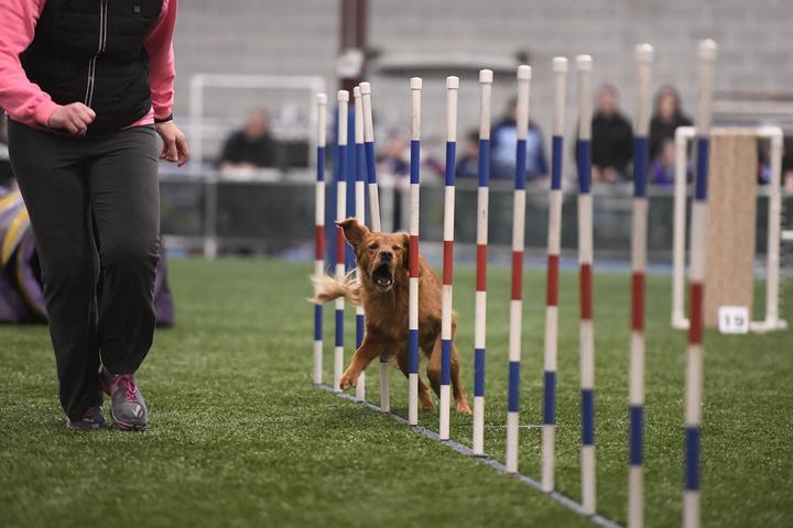 Pet Friendly Think Pawsitive Dog Training & K9 Splash Swim Center