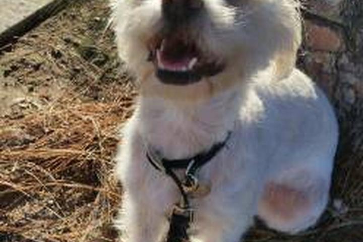 Pet Friendly Happy Paws Dog Walking & Pet Sitting