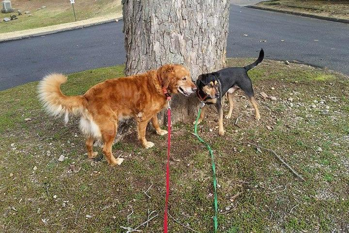 Top Woodbury, CT Directory of Pet Sitters & Dog Walkers Directory