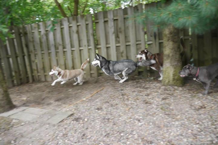 Pet Friendly New Jersey Mainstream Pet Care
