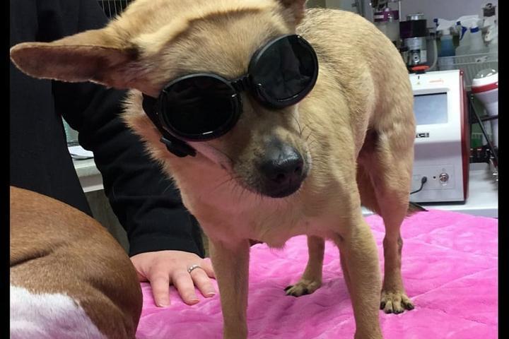 Pet Friendly Greenland Veterinary Hospital