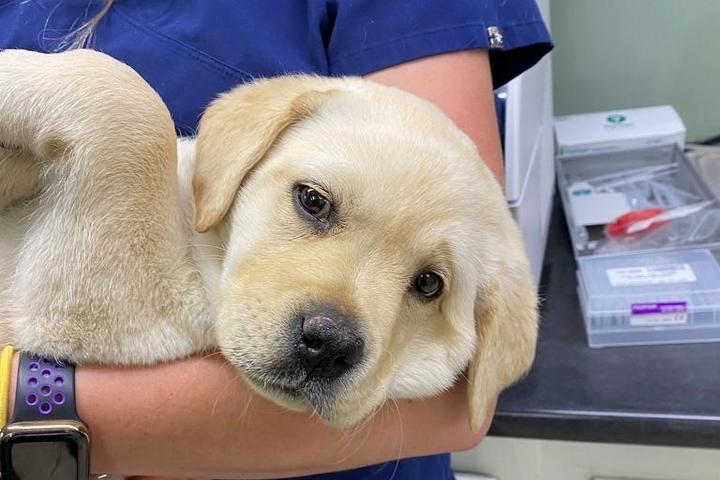 Pet Friendly Vail Valley Animal Hospital