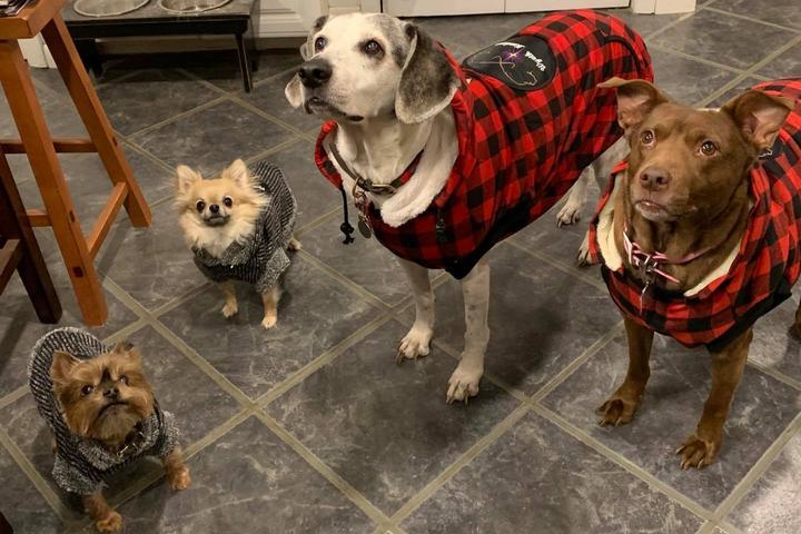 Pet Friendly GiggyBites Bakery for Dogs