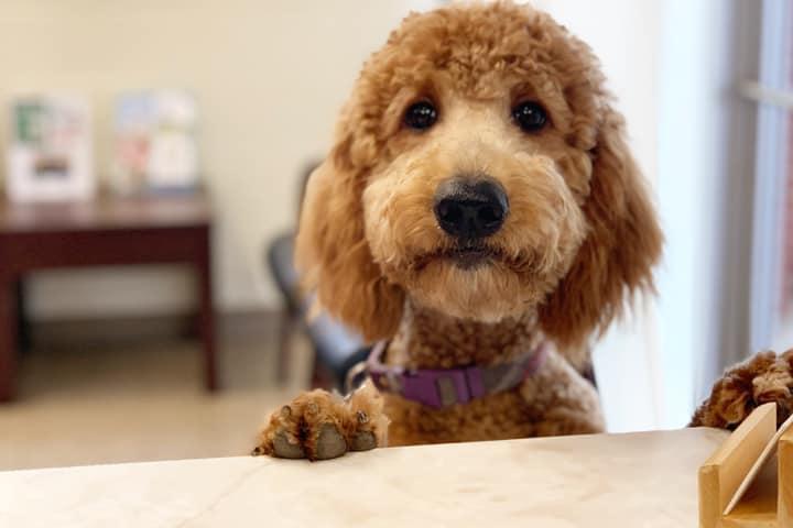 Pet Friendly Meller-James & Associates Veterinary Services