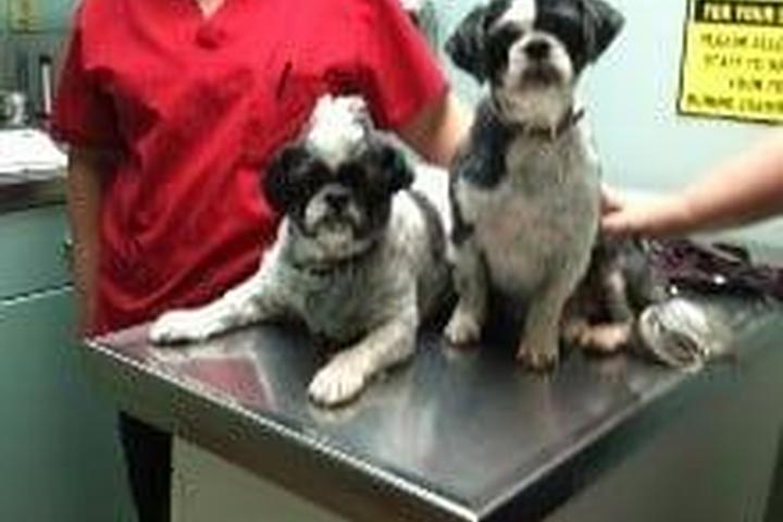 Pet Friendly Groveport Canal Animal Hospital