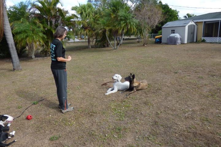 Pet Friendly VIPet Services